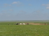 2011-06-mongolei-1-193