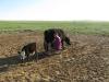 2011-06-mongolei-1-196-1