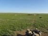 2011-06-mongolei-1-196-3-2